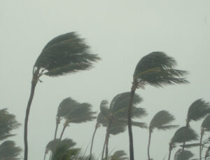 image of palm trees in hurricane outside vacation home